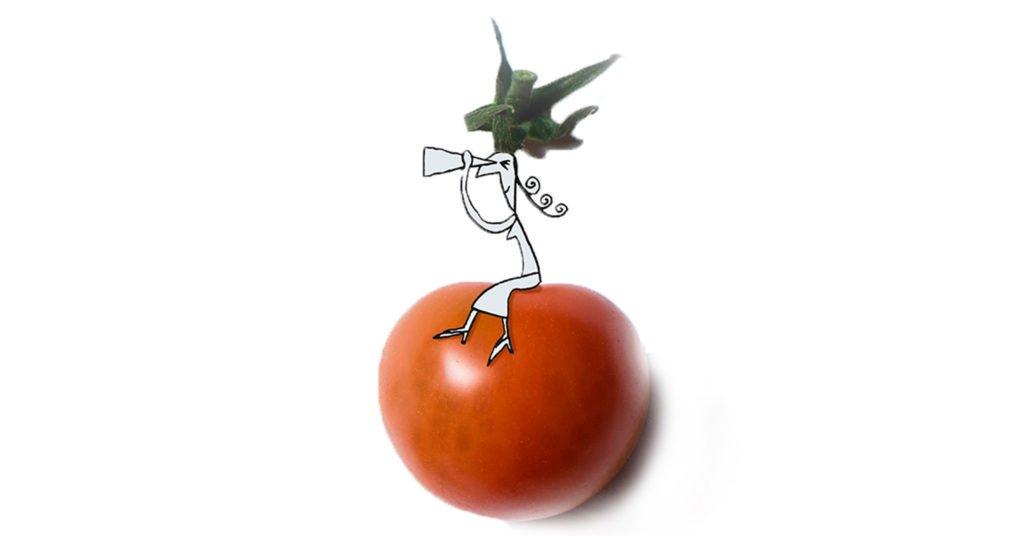tomaat-zoeken-illustratie
